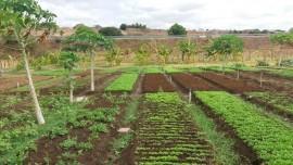 malta-hortaliça-agroecologica-7-270x152